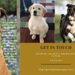 Pet Euthanasia at Home San Antonio - Gentle Pet Passages