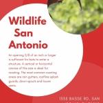 Wildlife San Antonio - Century Pest Control
